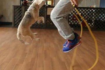 कुत्ते ने बनाया रस्सी कूदने का वर्ल्ड रिकॉर्ड, देखिए वीडियो
