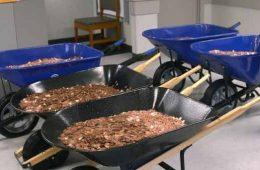 5 ठेलों में 3 लाख Coins लेकर टैक्स