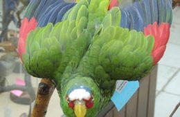 मैक्सिको में मिली तोते की सबसे दुर्लभ नीली प्रजाति