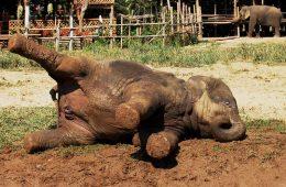 एक चिड़िया ने पटक दिया हाथी को, हैरान कर देने वाला वीडियो
