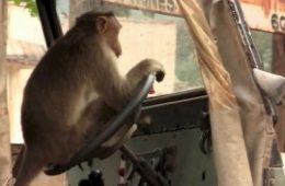 Monkey drive Bus